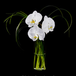 3 Face Orchid Vase