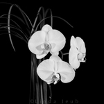 BW Three Face Orchid Vase
