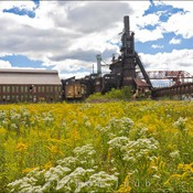 Carrie Furnace Flowers